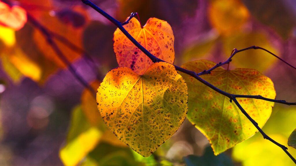 autumn-leaves-3813741_1920